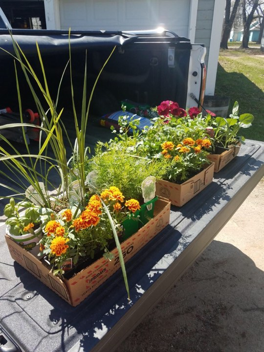 Flowers, herbs, vegetables and other plants Ashley purchased for her garden this year.
