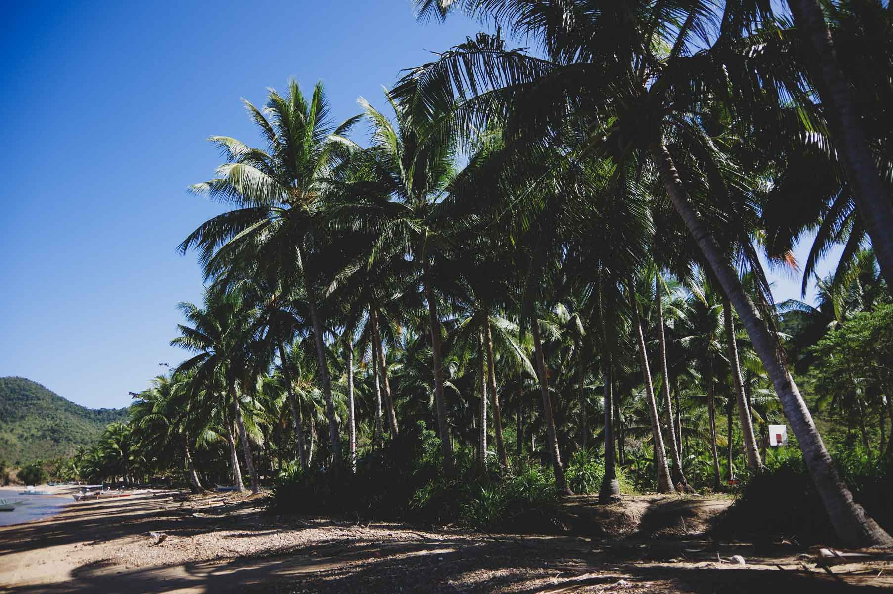 Coconut trees decorate the shoreline of Coron and protect the community from the strong coastal winds.