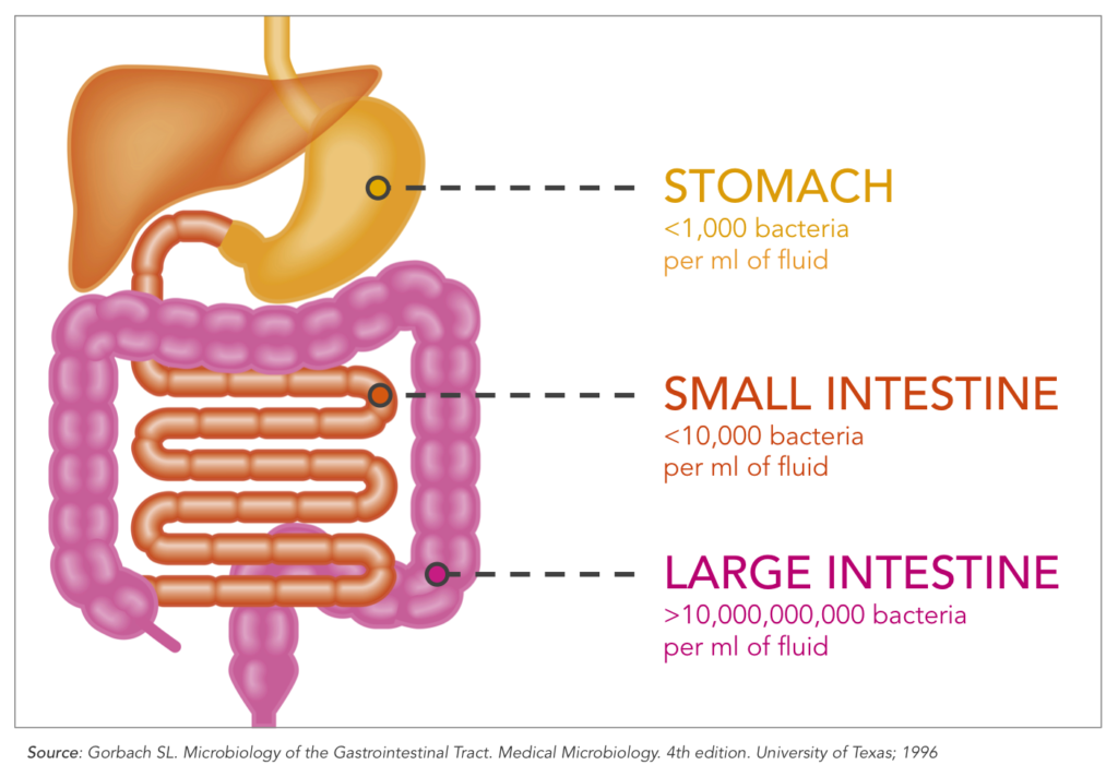 bacteria numbers intestine stomach bowel