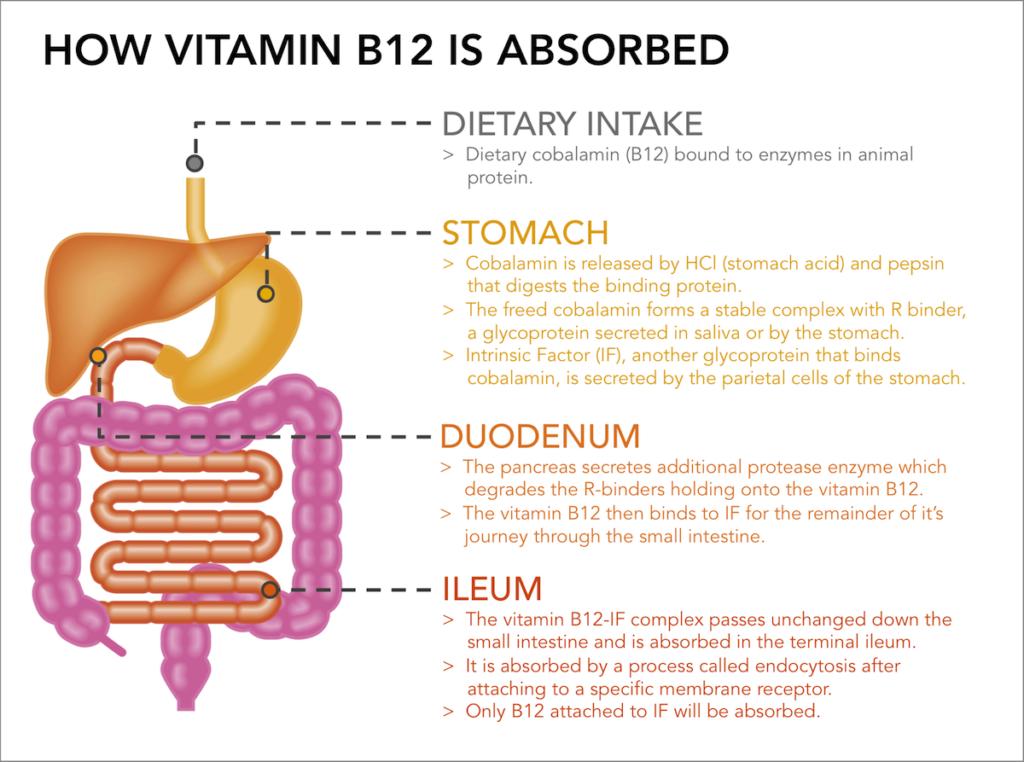 vitamin b12 deficiency causes
