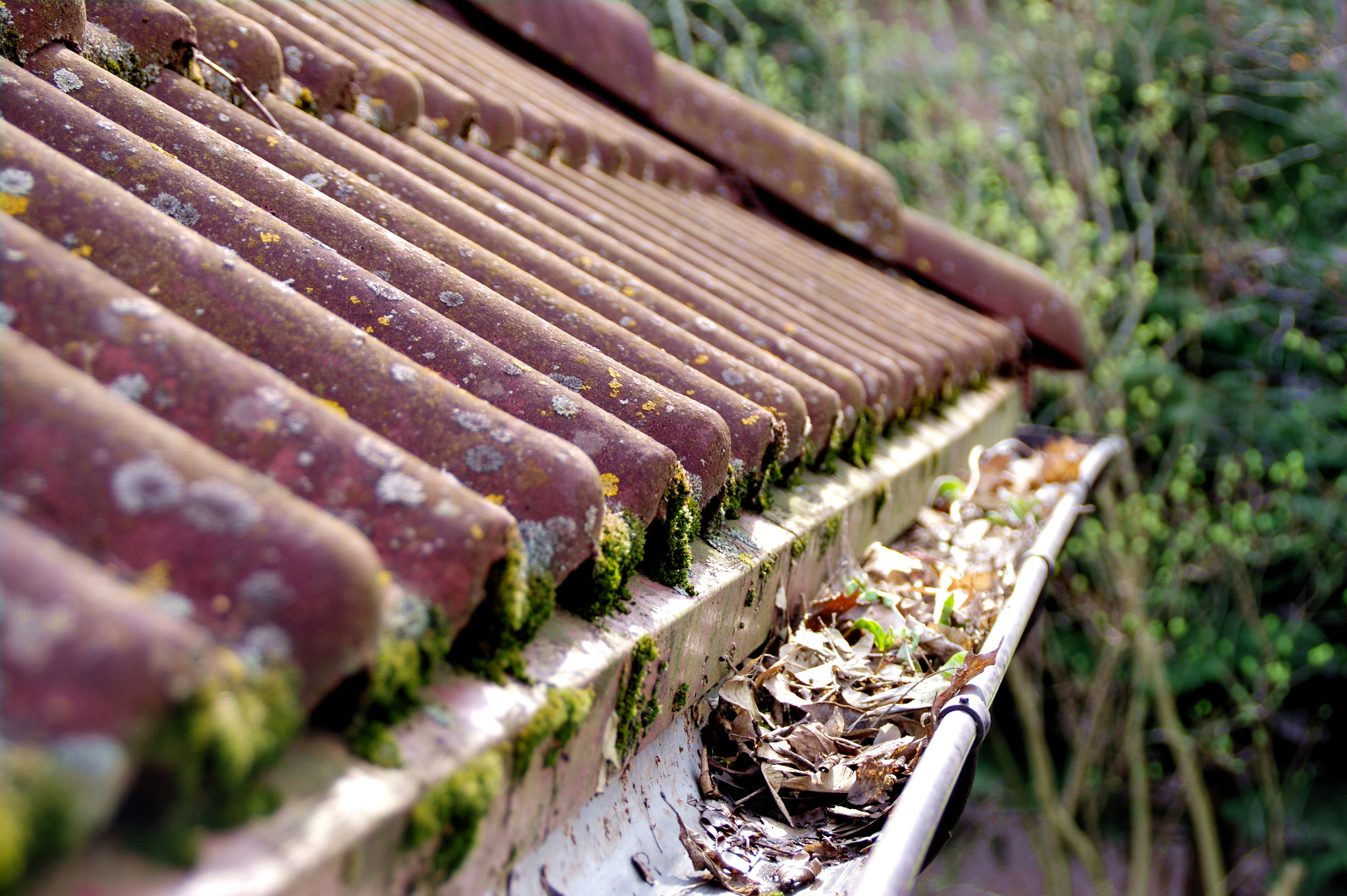 GUTTERS - Don't wait till its too late. Preventative maintenance will give you peace of mind. We can help.Dirty gutters can contribute to dry rot and ruin your roof membrane 65% faster then roofs with clean gutters.85% of gutters go un-cleaned every year. Schedule a yearly cleaning and have peace of mind your gutters are in good hands.