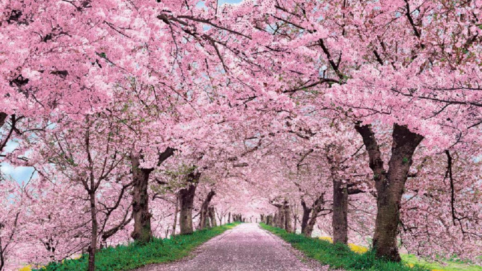 blossom-3.jpg