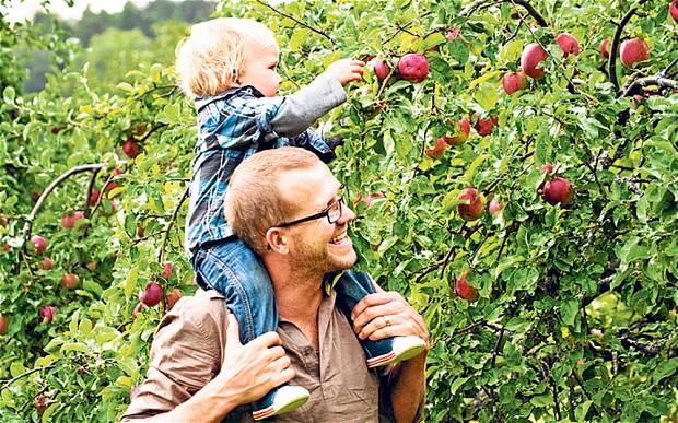 fruit-picking.jpg