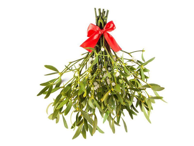 mistletoe-2.jpg