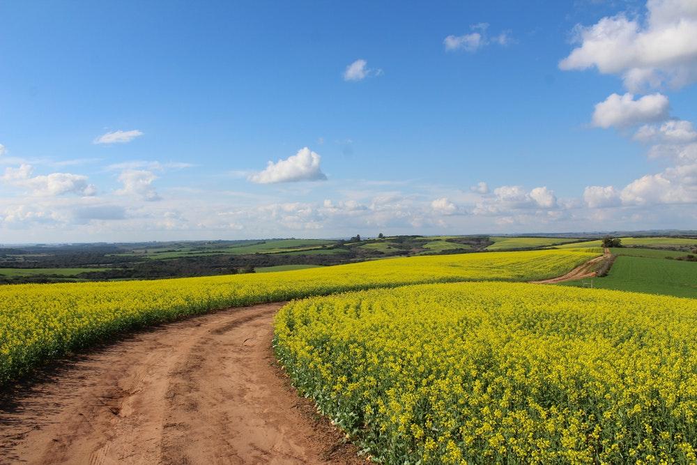 countryside.jpeg