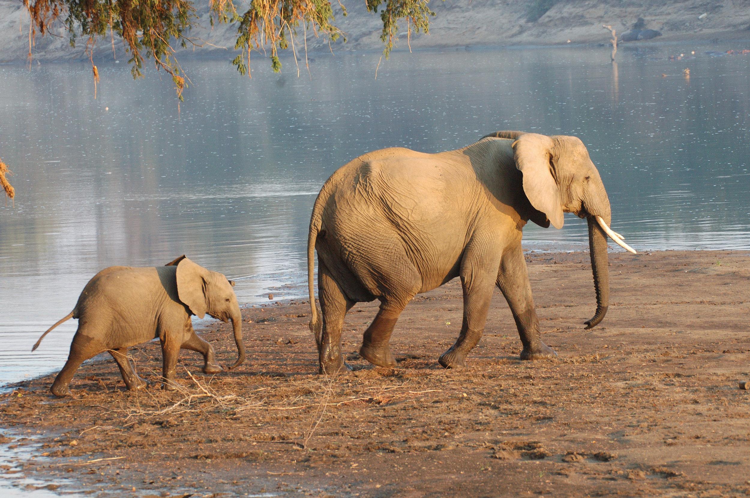 Elephants & Baby.jpg