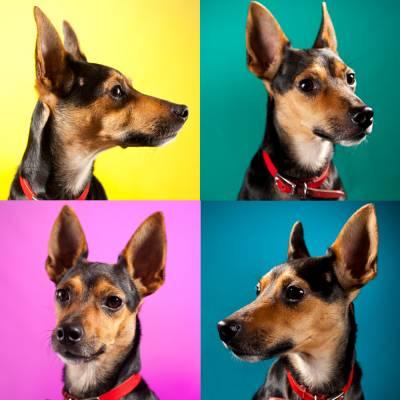 Dog Photographer.jpg