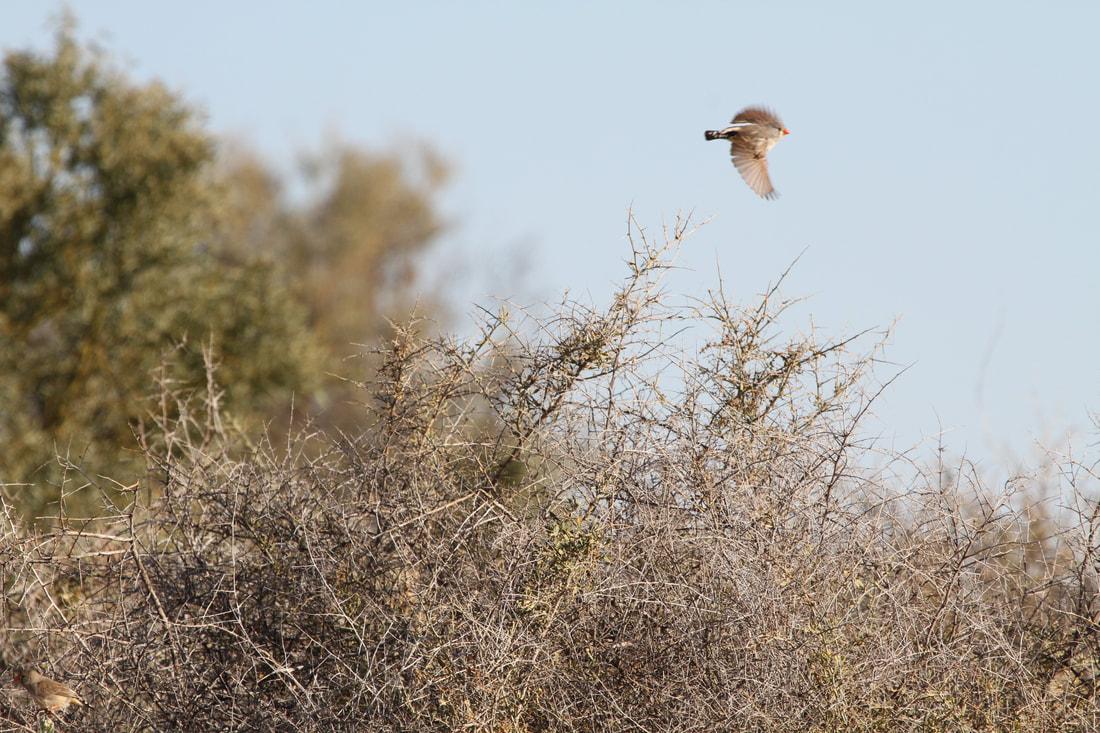 female-in-flight_orig.jpg