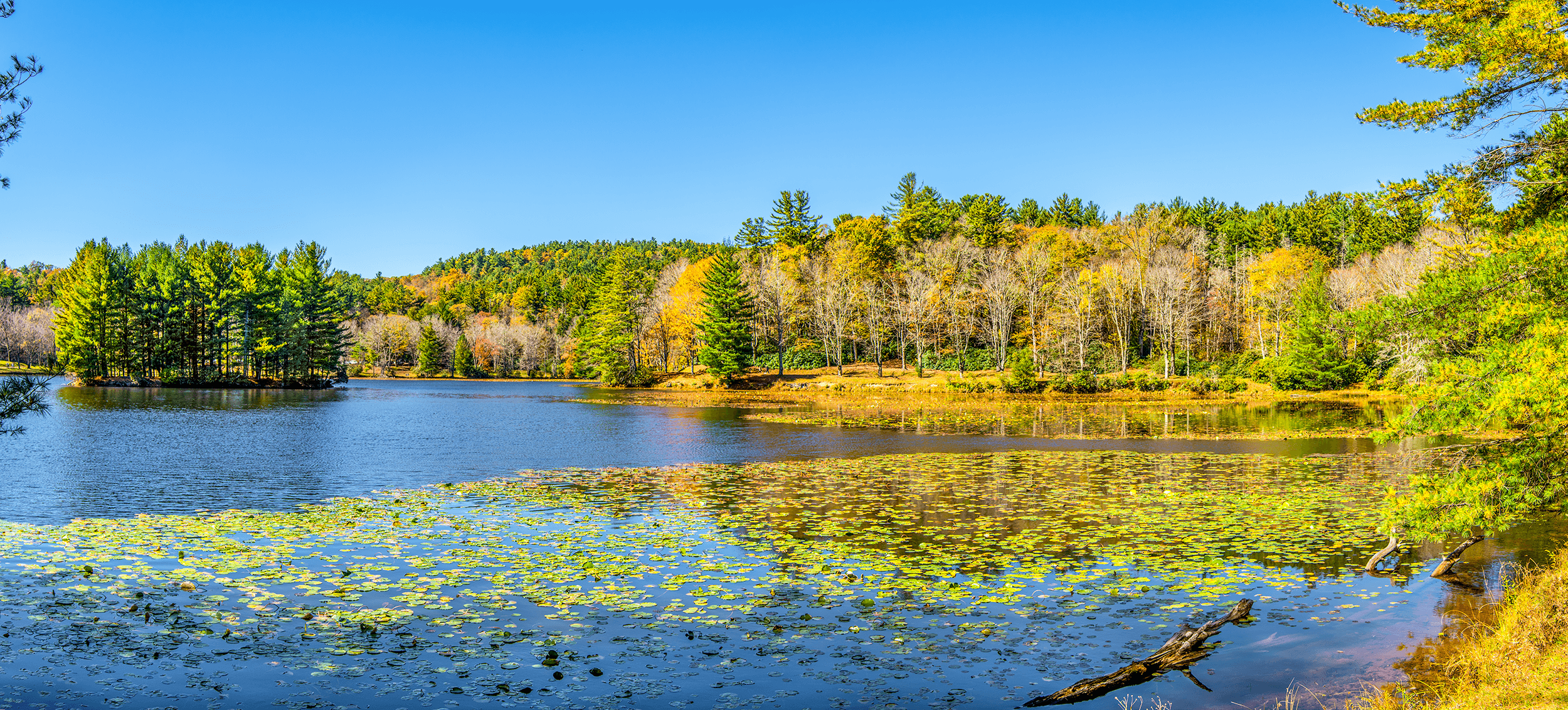 Take a moment and enjoy this gorgeous fall panorama at  Bass Lake . This 21-acre man-made lake can be seen from  Flat Top Manor  and was the focal point of the estate's landscape design. It even featured a cute little island with pine trees. The Cones planted water lilies in the lake's shallows. As the lake's name implies, it was usually stocked with bass.  Bass Lake  reflected the grandeur of the home and the beauty of the nearby plantings, such as sugar maples, whose leaves turn yellow and red in the fall.