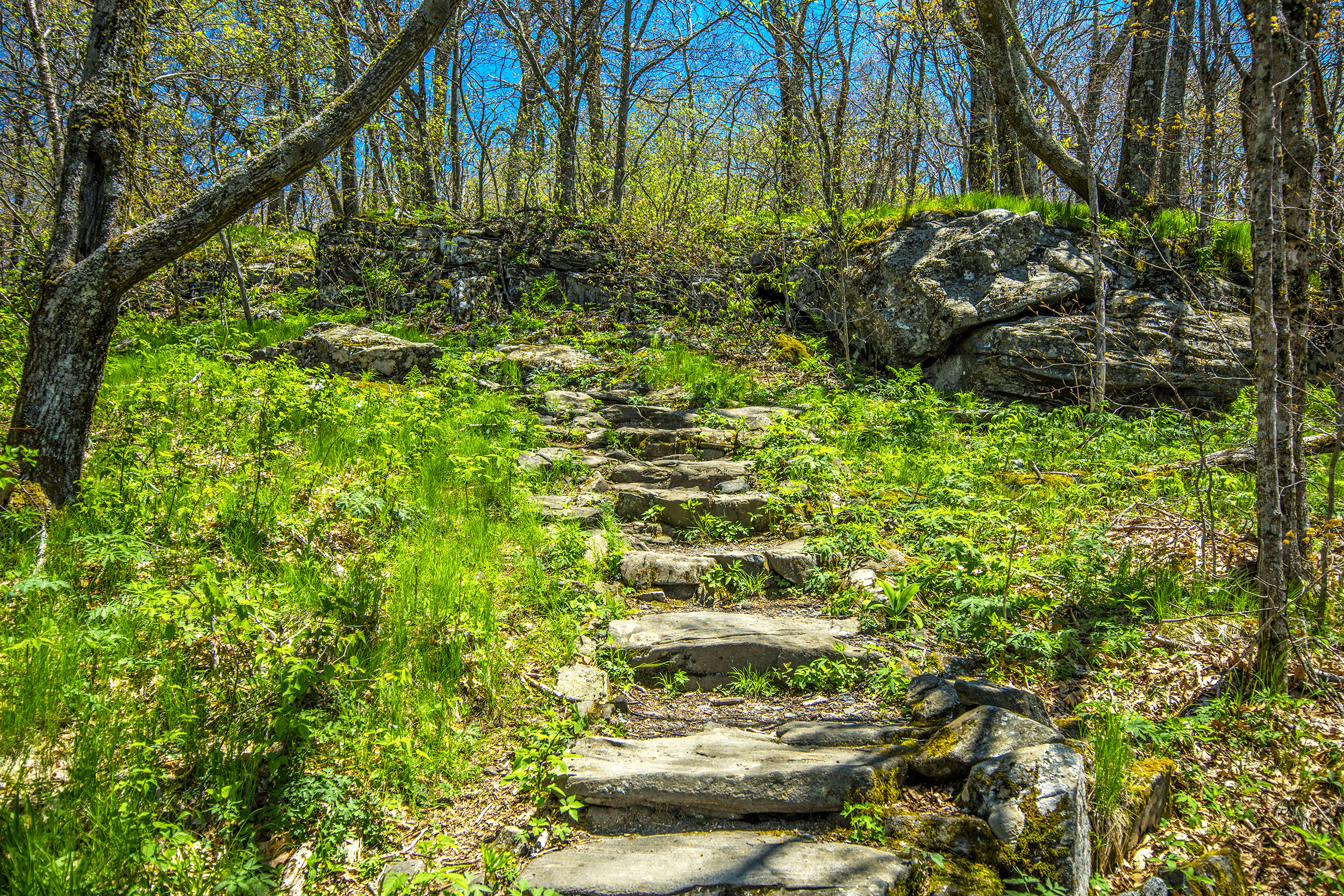 Some parts of the path have a stone staircase built into the trail, especially during the first half of the ascent. Did you know that a large number of volunteers helped to construct the trails in  Elk Knob State Park ?