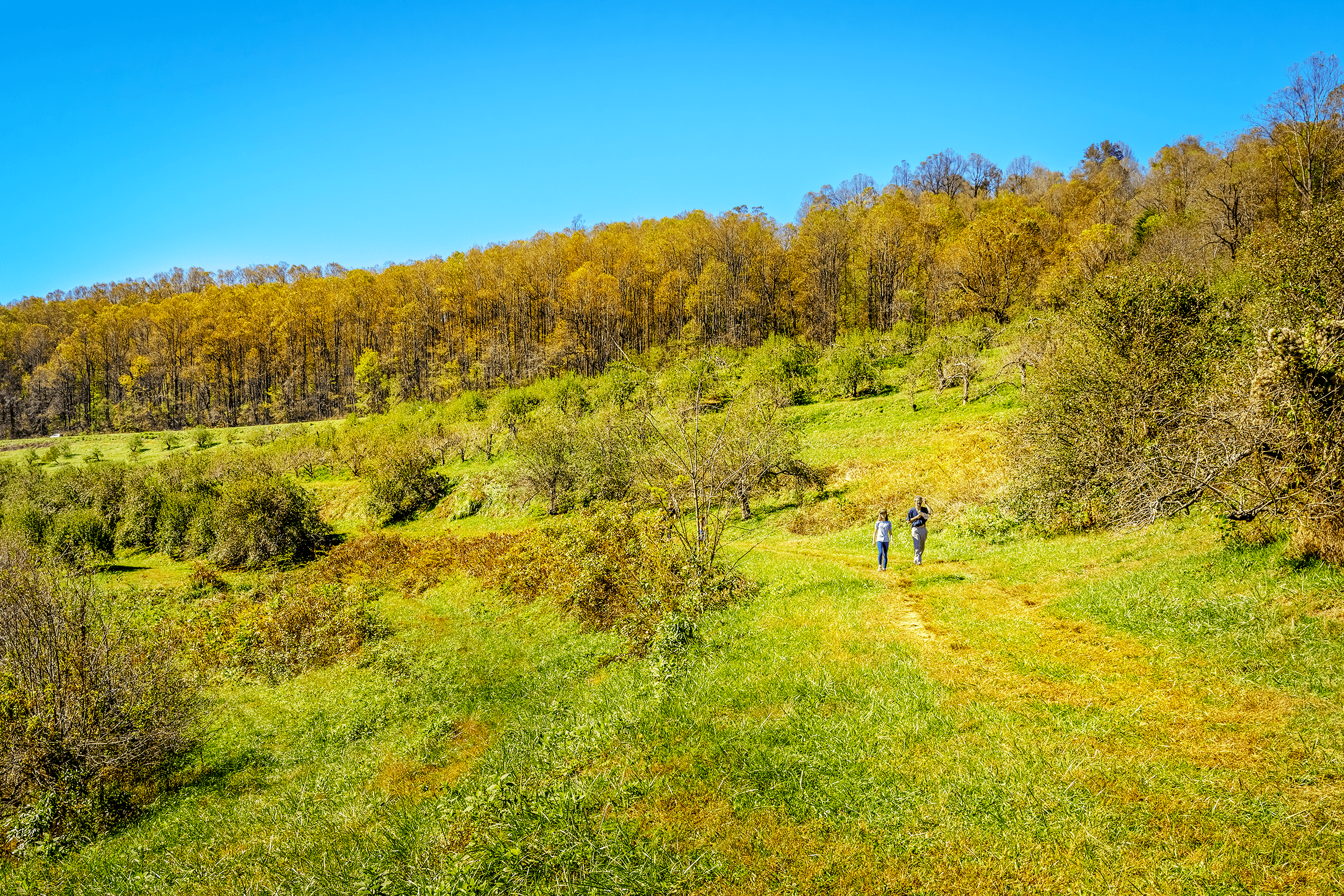 Several short, easy to moderate hiking trails lead through the orchard along rows of apple trees.