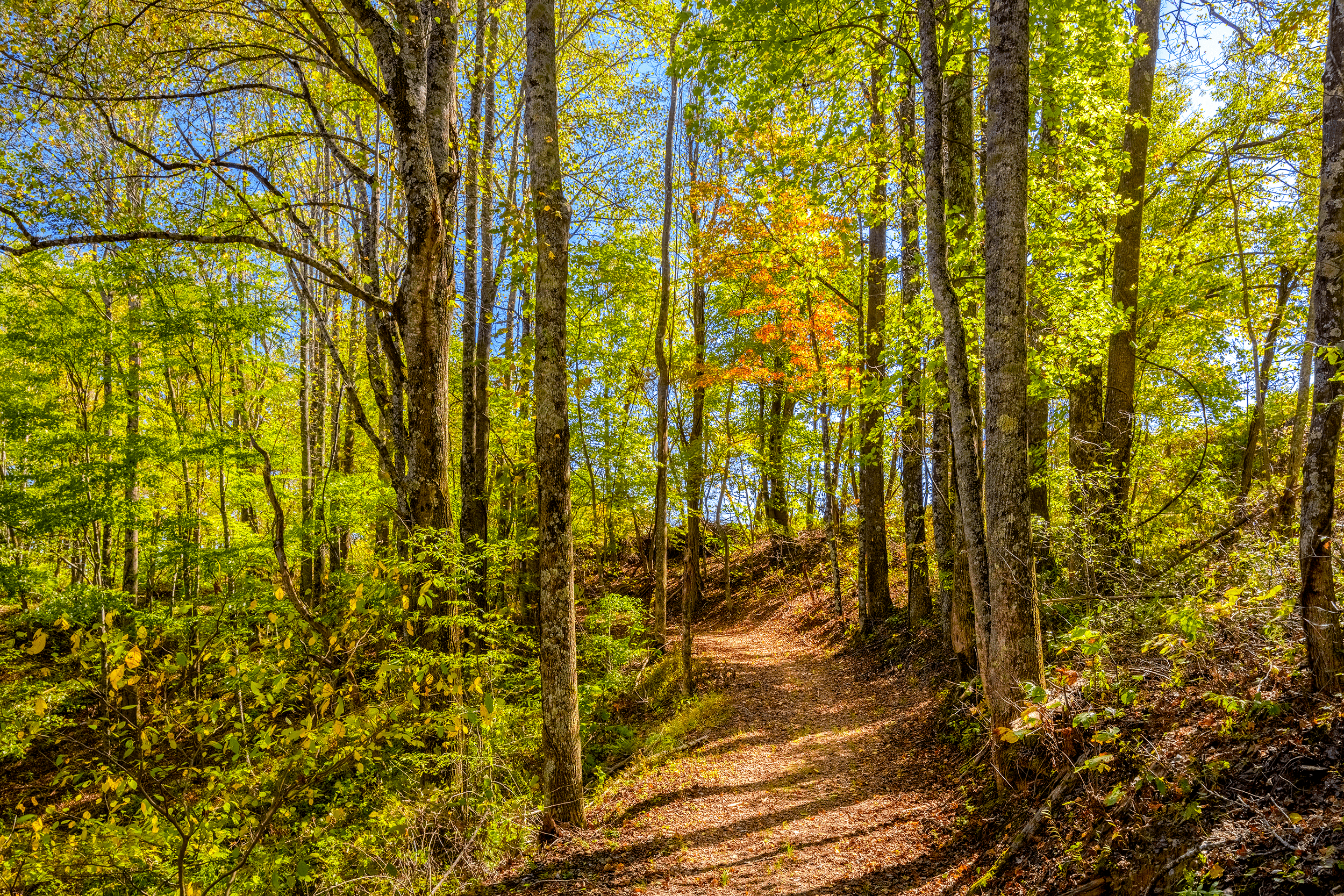 At its lowest point, the  Loop Trail  leads through a wooded area near the railway tracks.