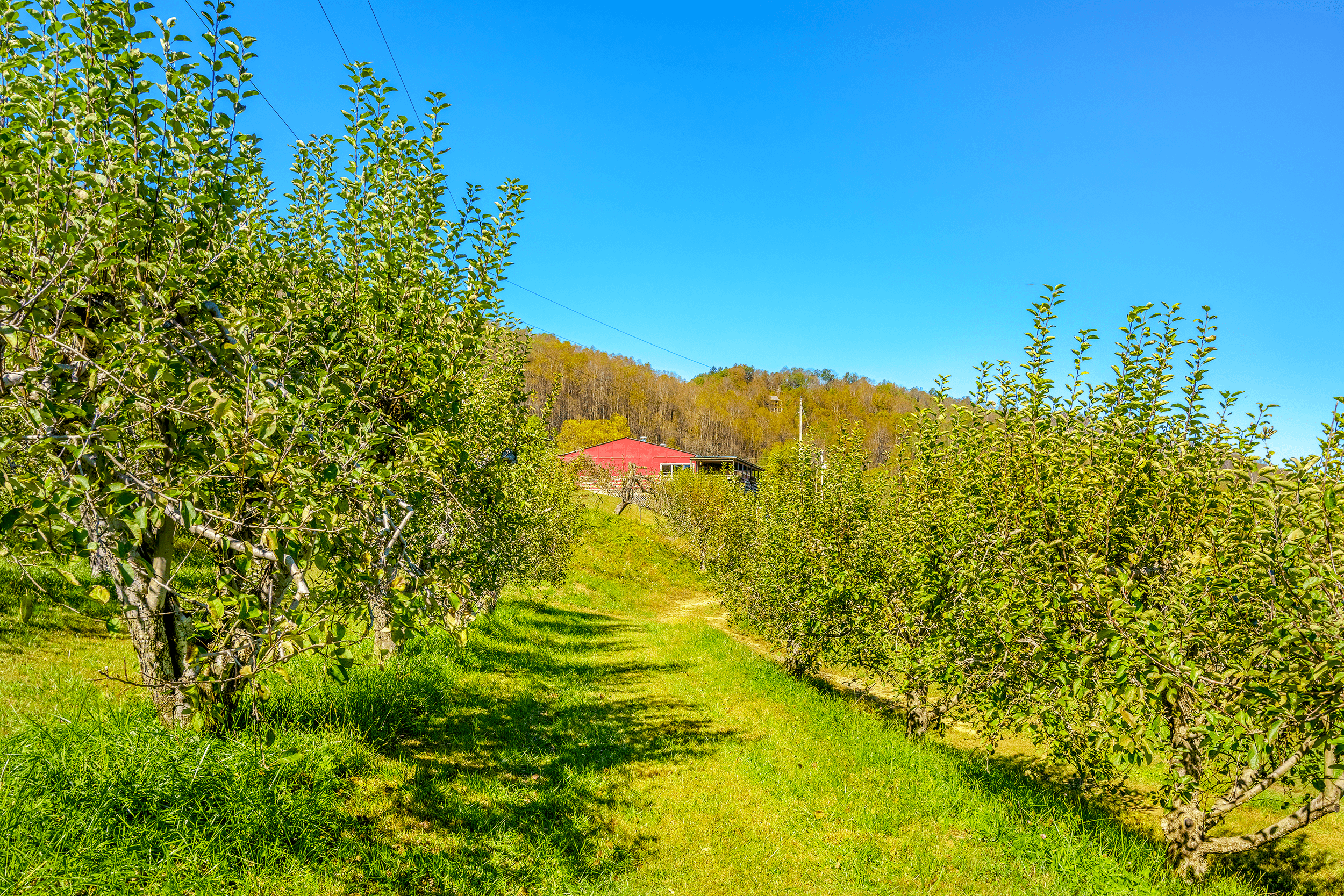 The 2-mile (3.2 km)  Loop Trail  brings you back to the red painted store, which was once the packing-house for the orchard in the 1950s.