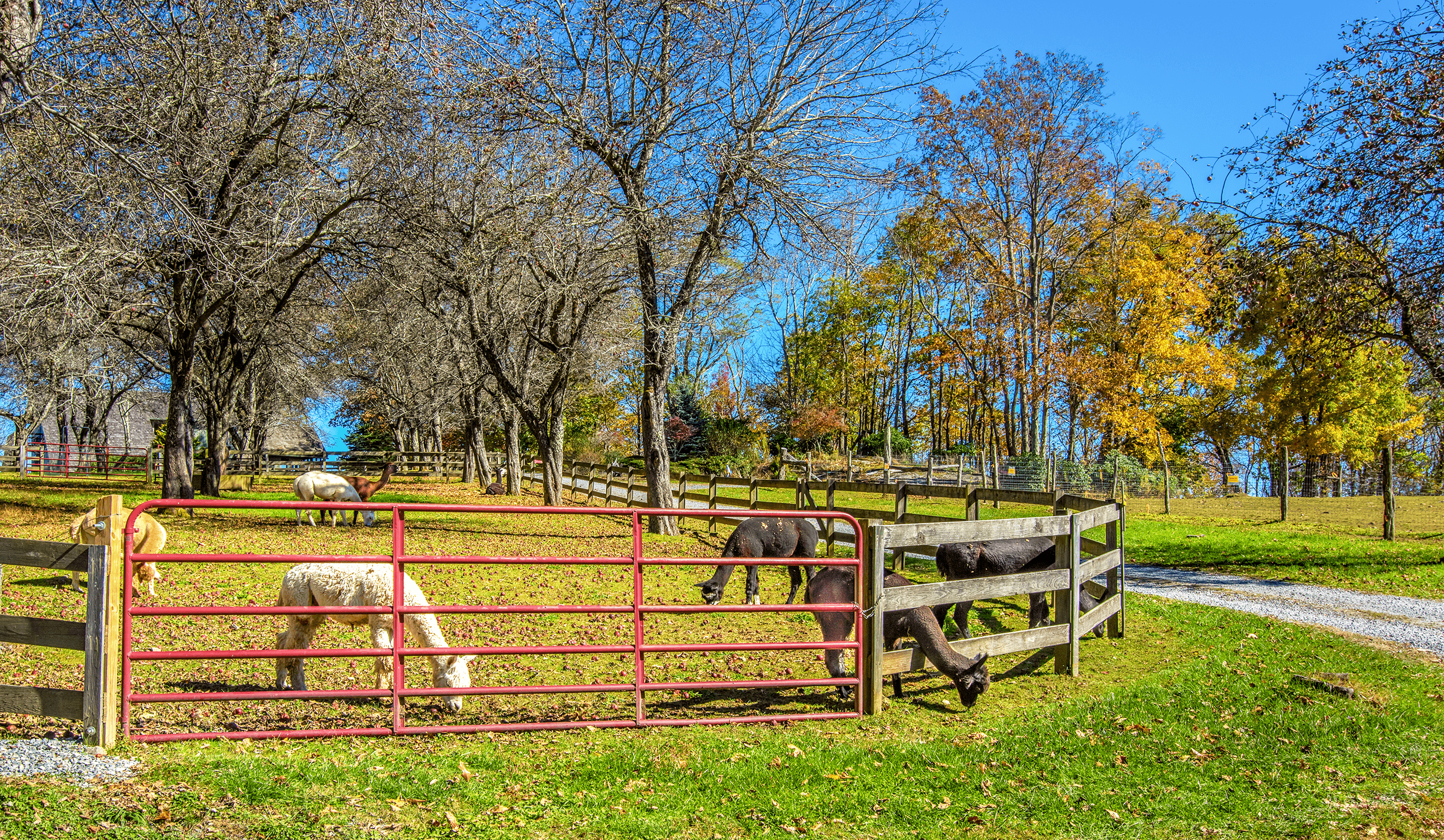 Apple Hill Farm  is a working Alpaca Farm on the picturesque hilltop of Valle Mountain 6 miles (10 km) east of Banner Elk, NC. Visitors can take a guided tour of the farm and learn about alpacas, llamas, horses, angora goats, and even donkeys.