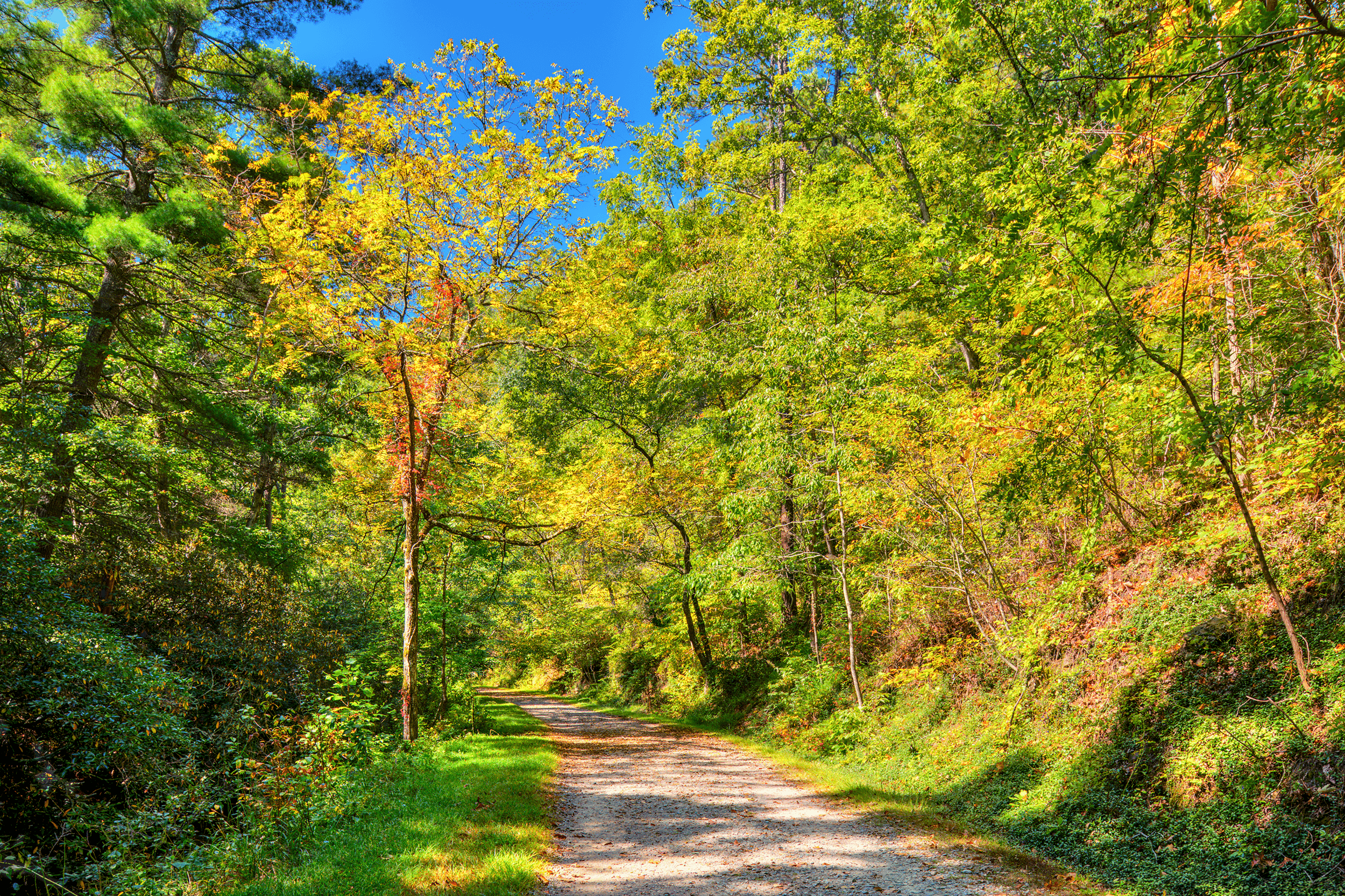 In addition to the various garden areas, the Arboretum offers a total of 11 trails for hiking and biking with over 10 miles (16 km) of fun and relaxation through western North Carolina woodlands.