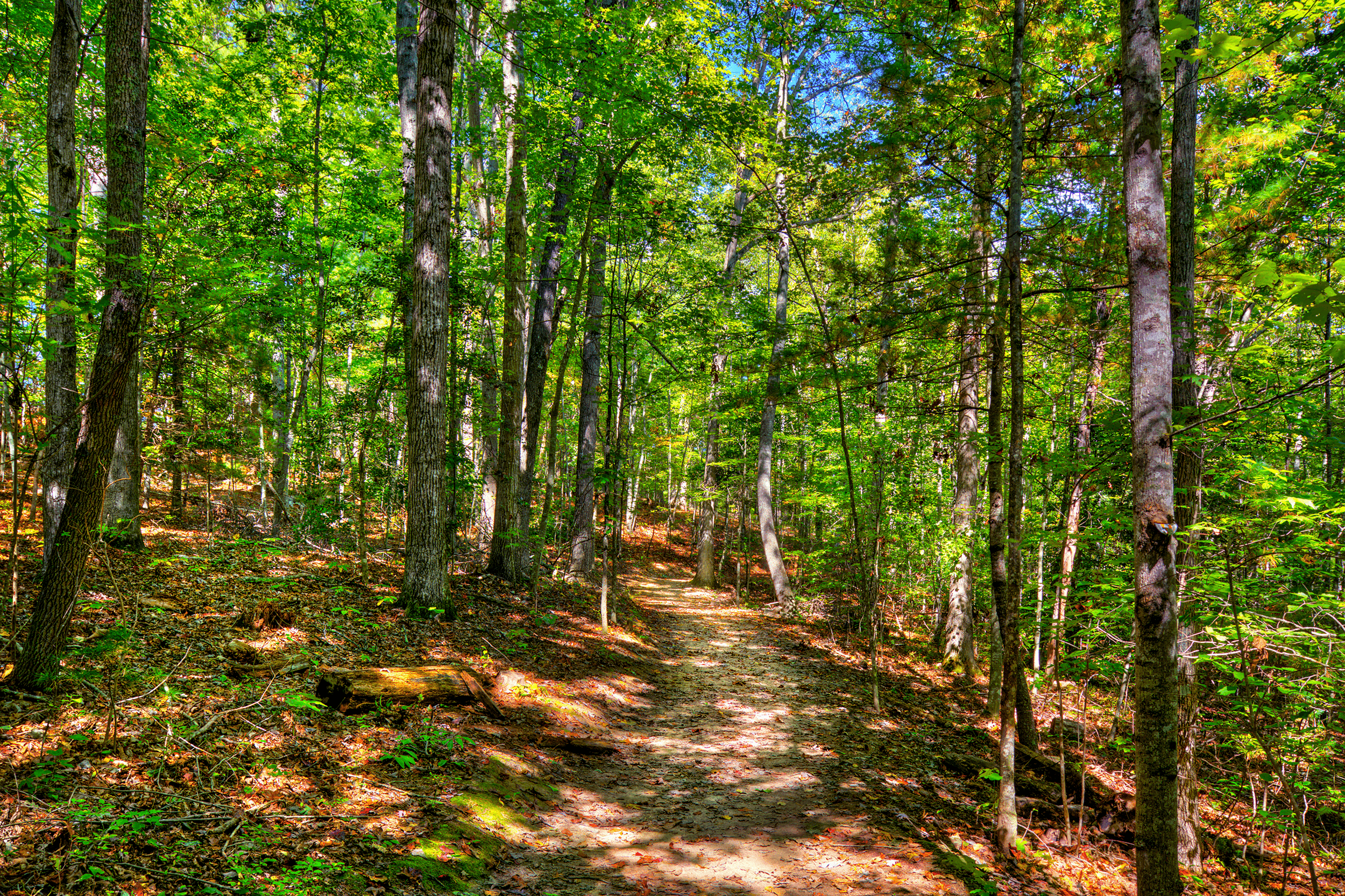 Six of the 11 trails are designated only for hikers. The paths are generally well maintained and vary from easy to difficult.