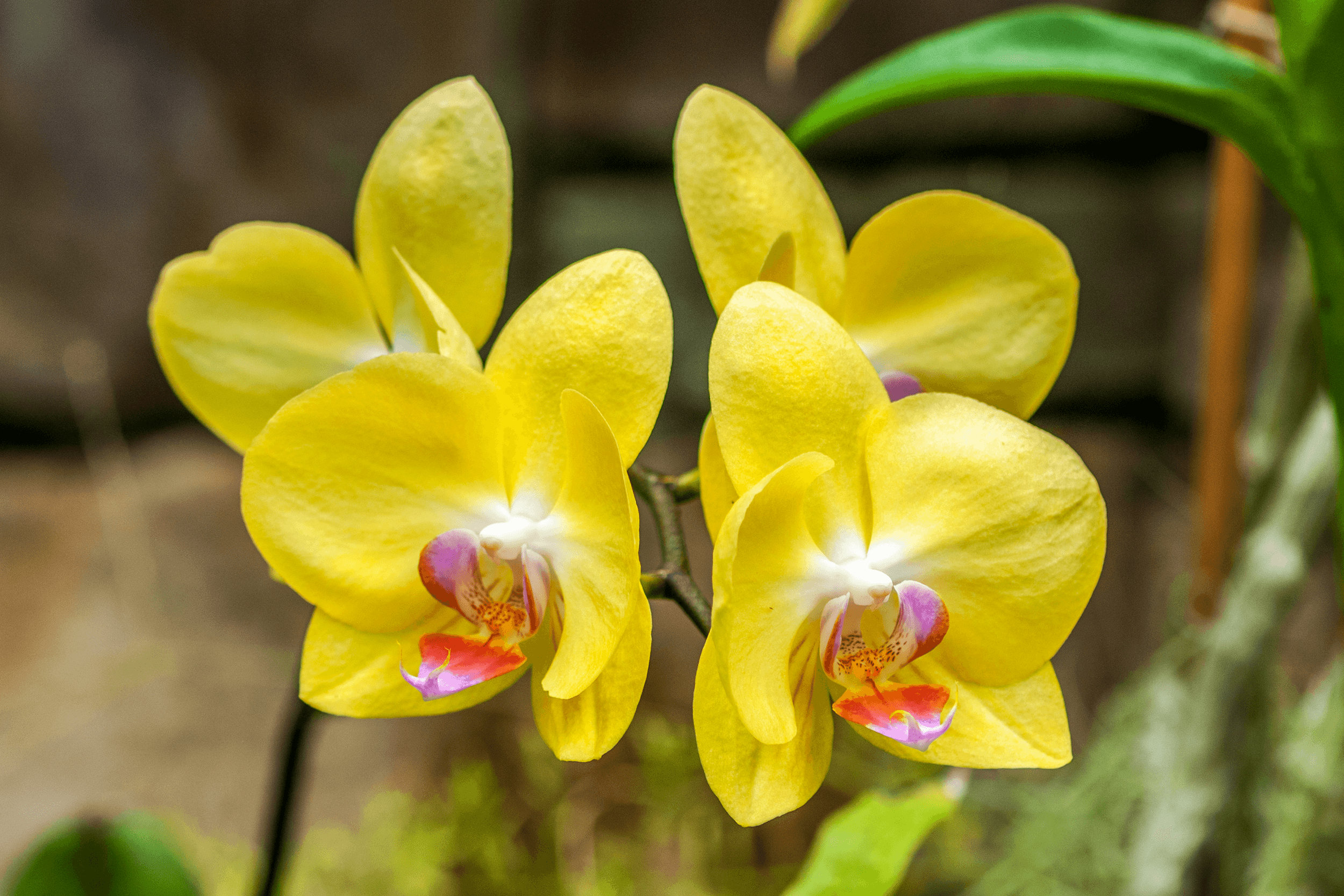 The  Orchid Conservatory  opened in 2008 and is dedicated to the display of tropical plants and is an enjoyable year-round destination.