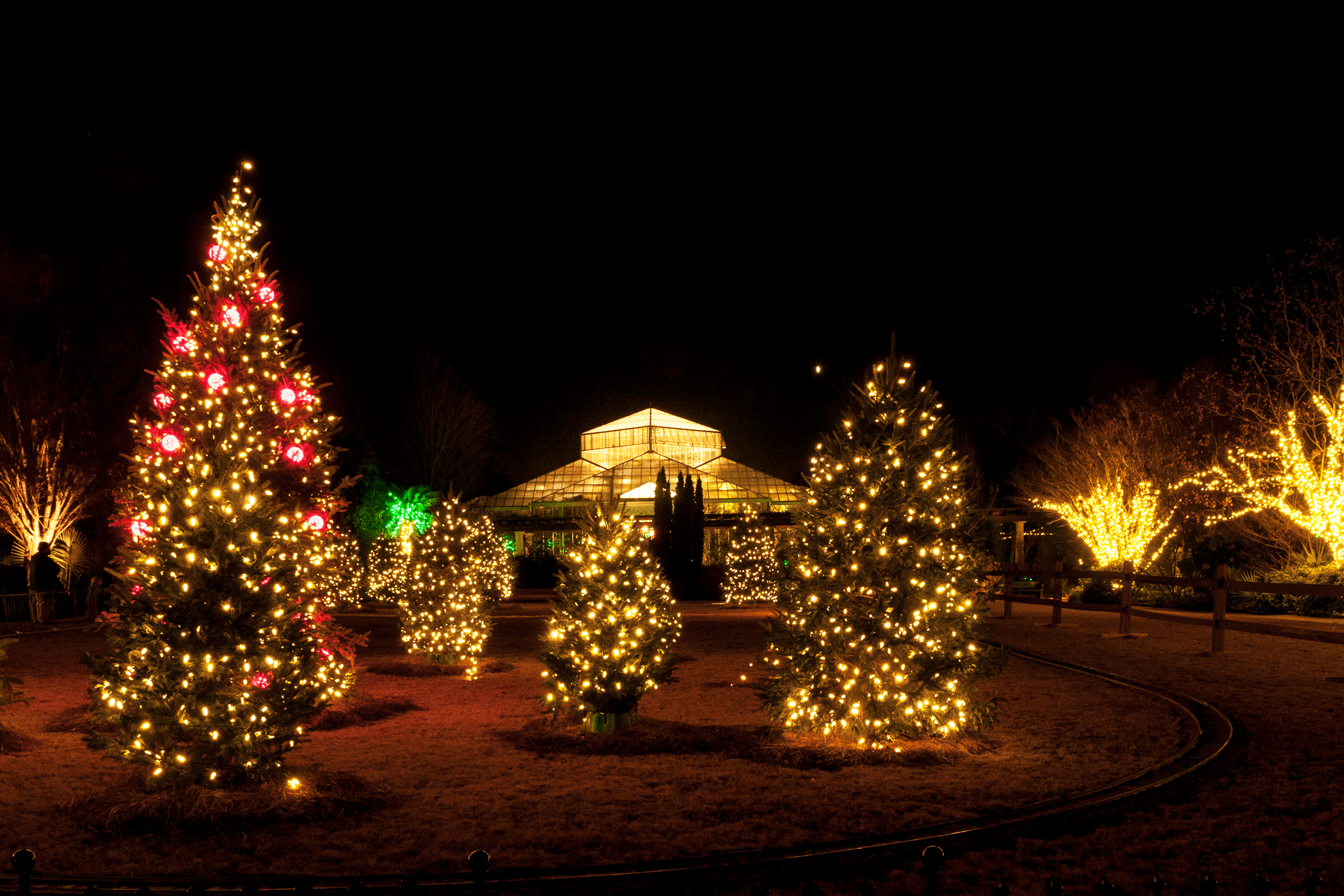 This is truly a festival of lights.