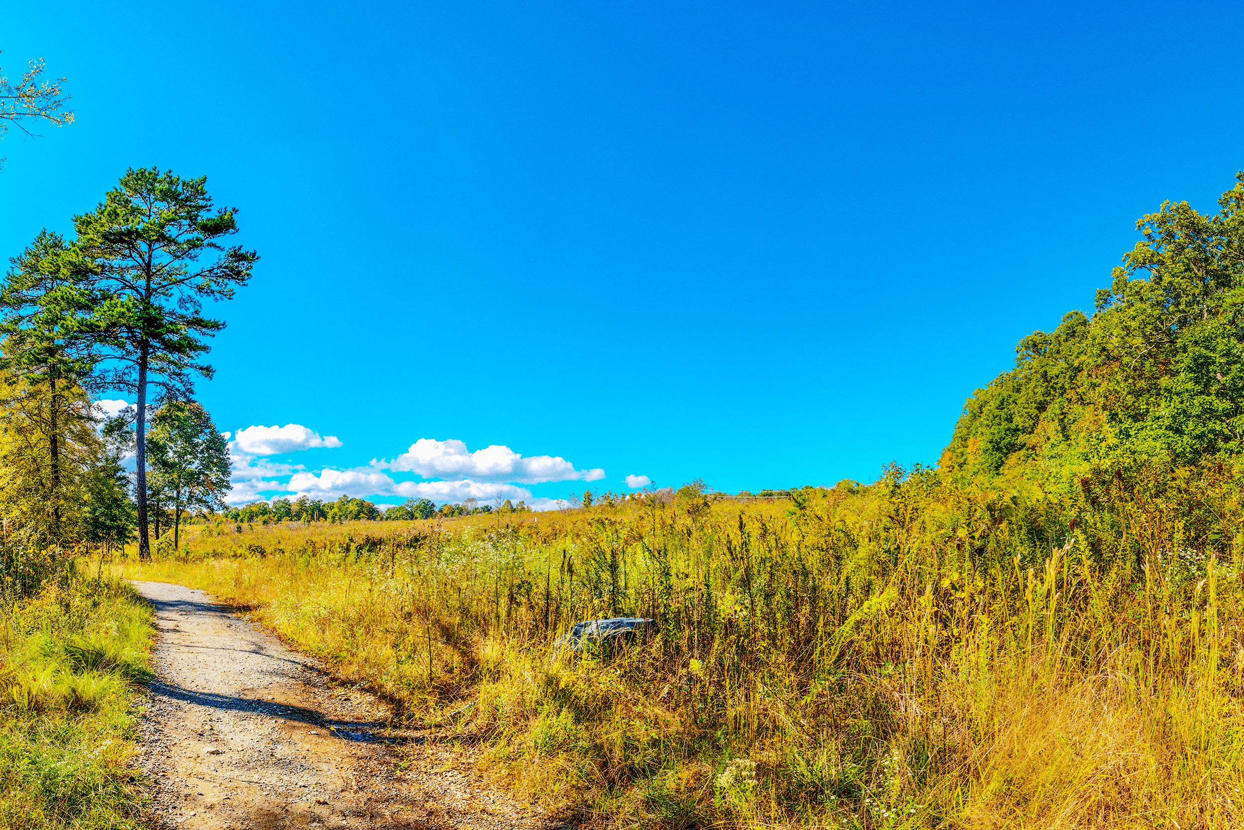 View of the  Piedmont Prairie Restoration Site  at the southern junction of  Split Rock Trail  and  Hill Trail .