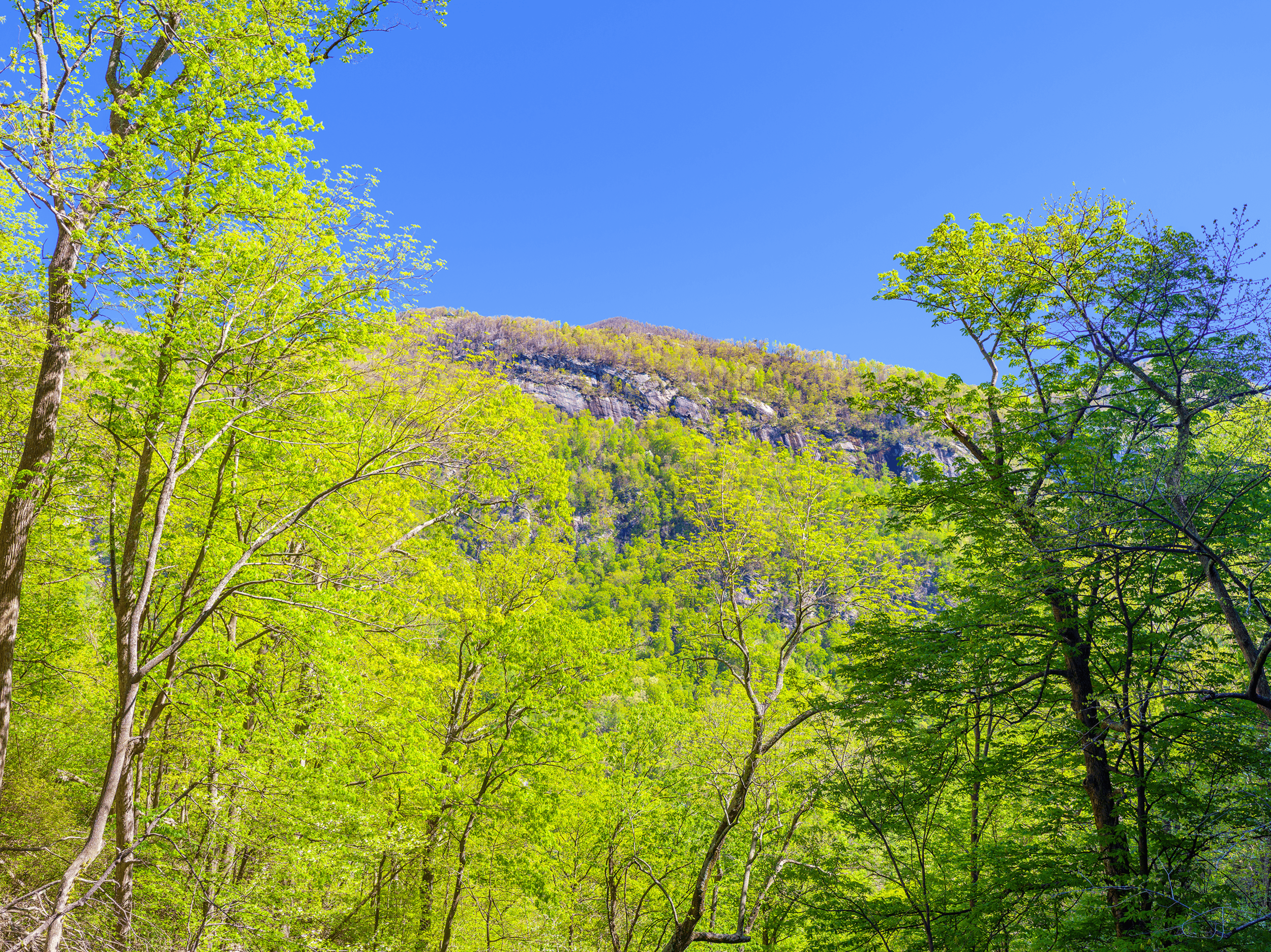 The viewing platform at  Hickory Nut Falls  also allows you to peek through the tree-canopy at the 3,816-foot (1,163 meters)  Shumont Mountain  on the other side of the valley.