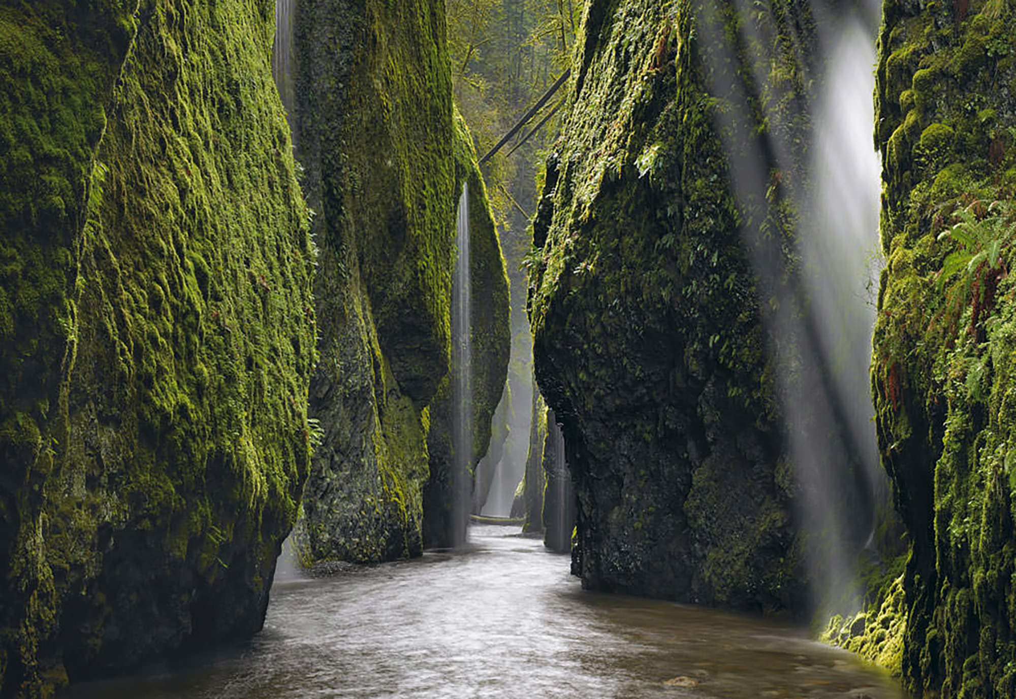 Oneonta Gorge - Columbia Gorge, OR
