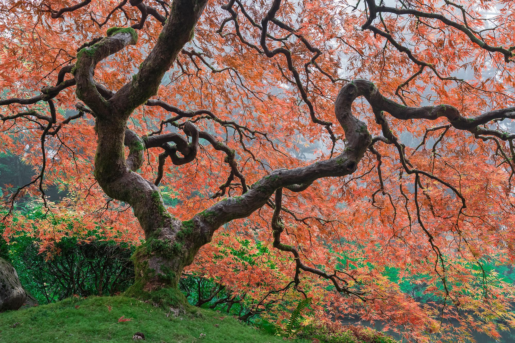 Japanesse Garden - Portland, OR