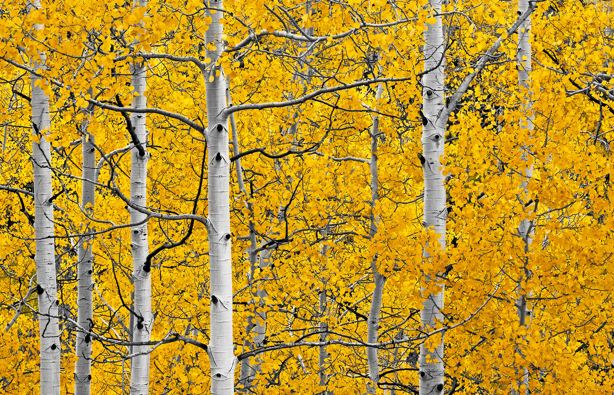 ASPENS ON LAST DOLLAR RD - Near Telluride, CO