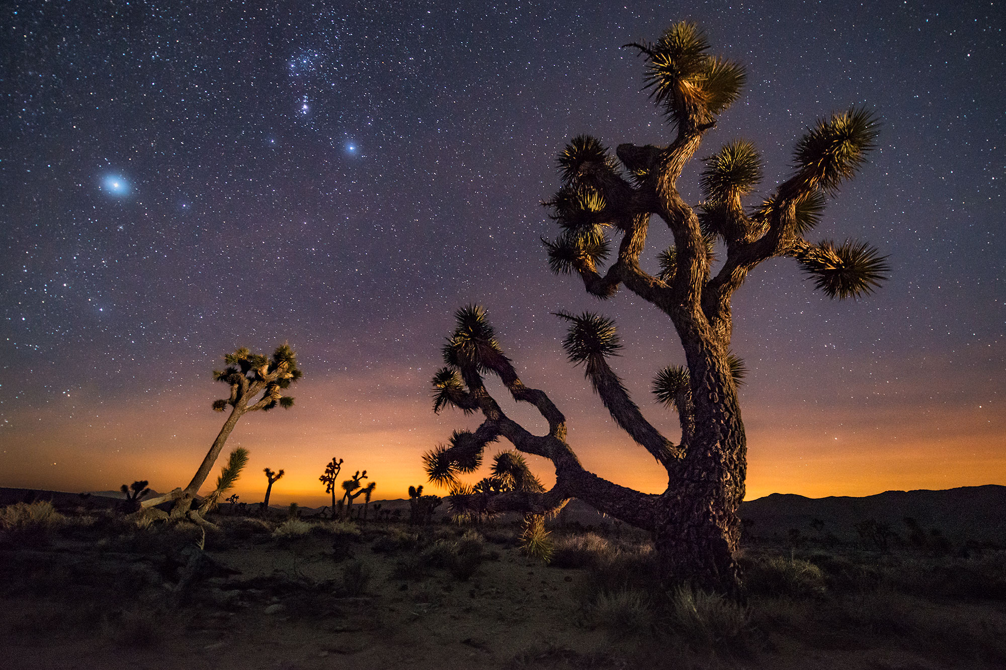 Joshua Tree at Lee Flat - Death Valley, CA