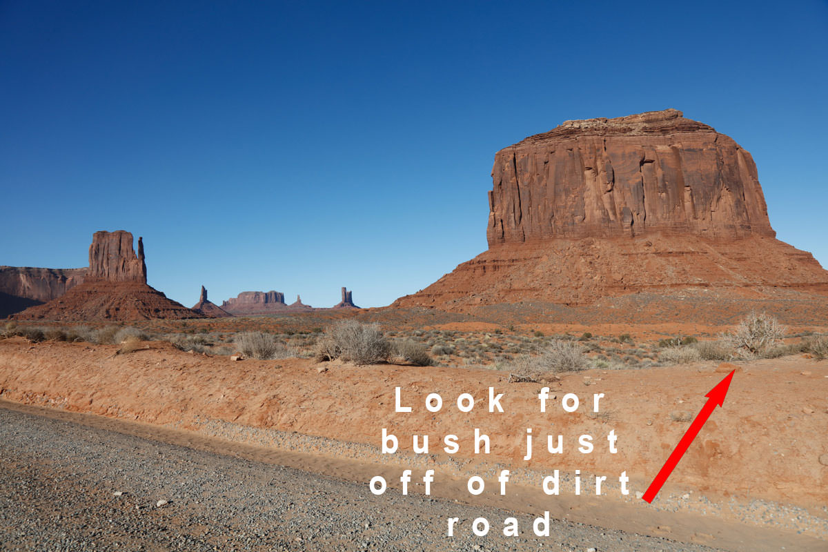 Look for large bush