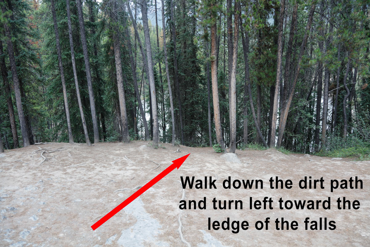 Enter the trees (unmarked path)