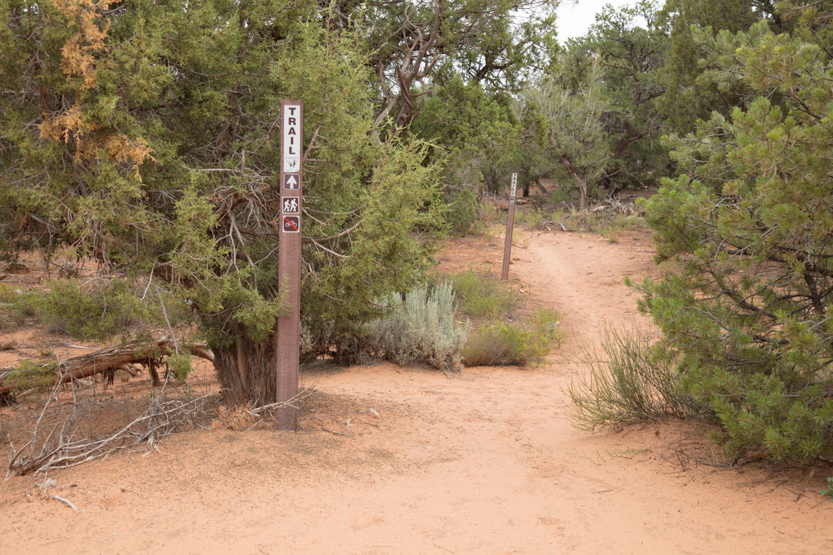 Look for trail