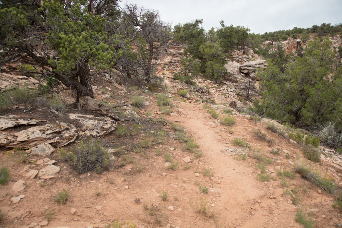 Follow trail until you descend to the wash