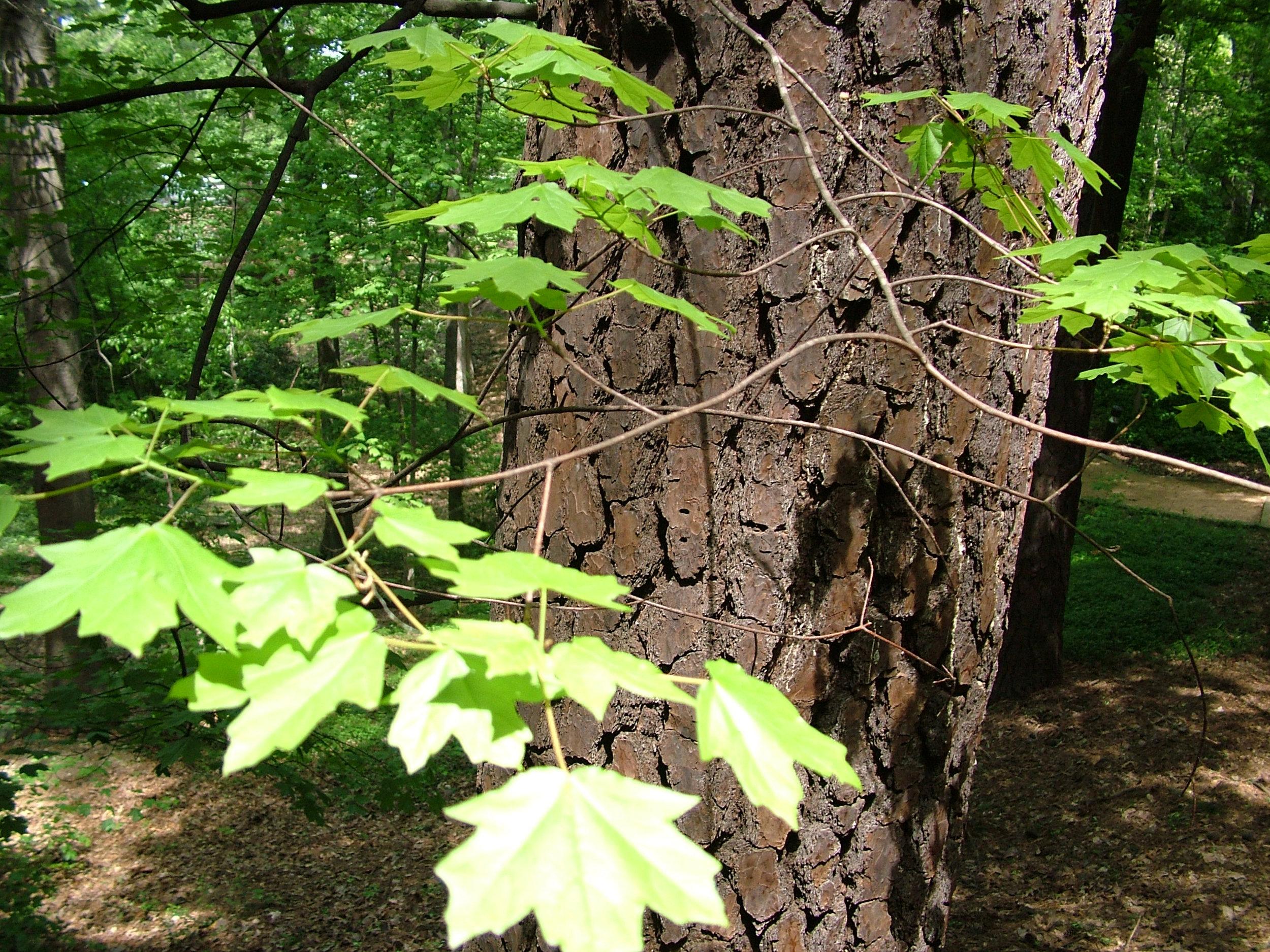 trees_ap07 029.jpg