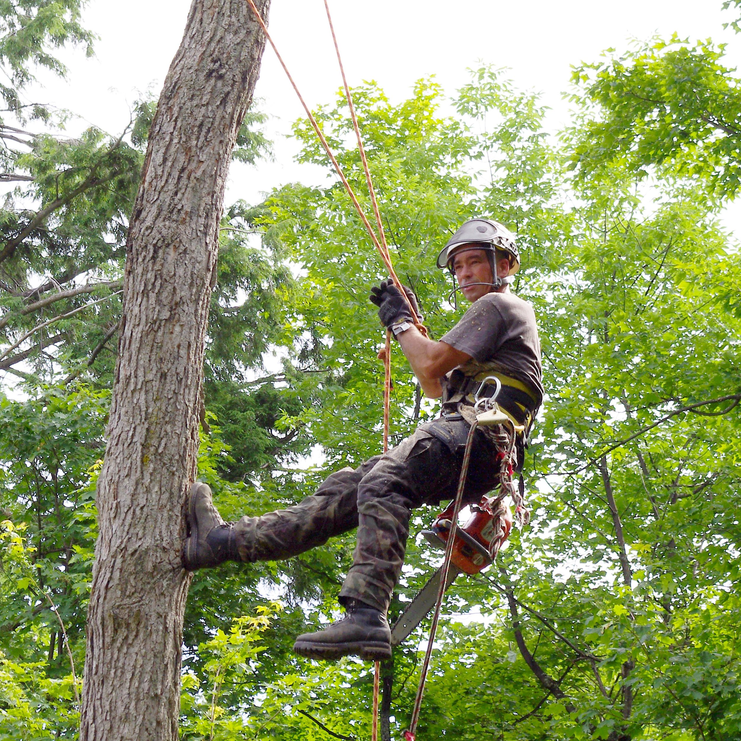 Jean-François Séguin, Propriétaire - Plus de 20 ans d'expérience dans le domaine. Spécialiste des arbres matures et dangeureux