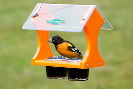 oriole eating at jelly feeder.jpg