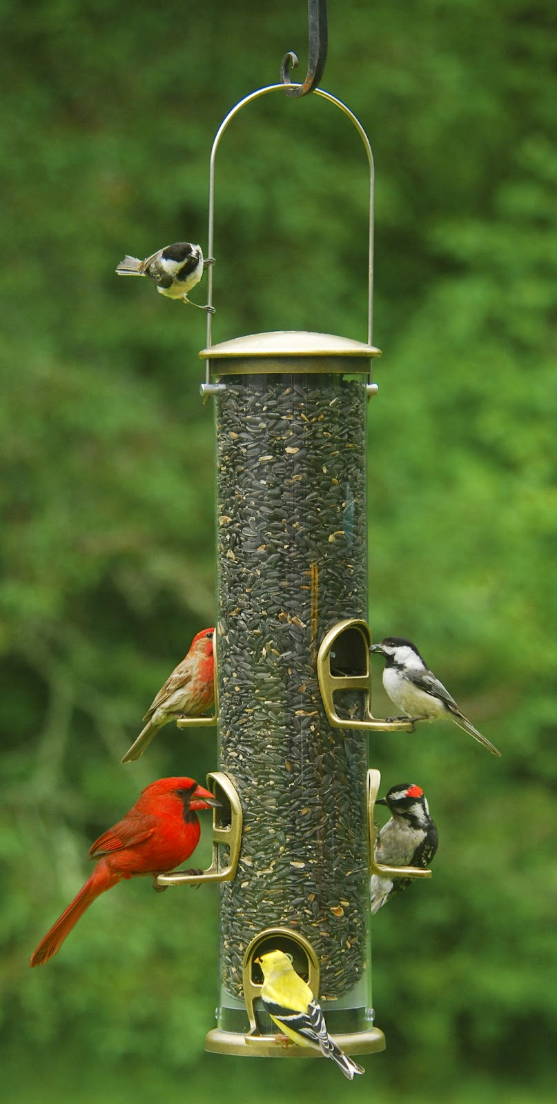 Mix Seed Tube Feeder (Finches, Woodpeckers, Nuthatches, Blue Jays, Chickadees, most all seed eating birds)