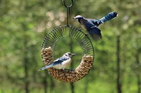 Peanut in the shell Wreath Feeder  BLUE JAYS LOVE THIS FEEDER ! Watch as one Blue Jay after each other take turns pulling peanuts out…