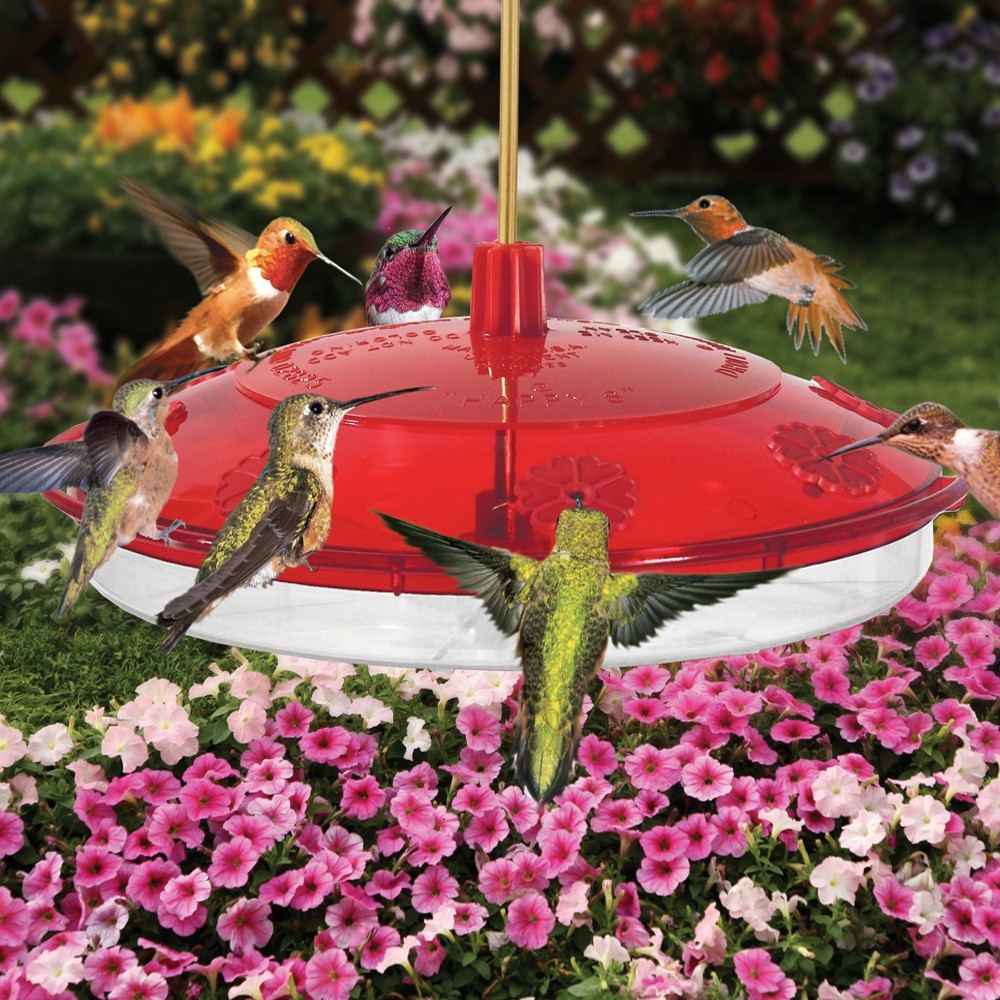 Hummingbird Feeder  Everyone needs a hummingbird feeder. Watch as they hover over your feeder, remember they like the color red…
