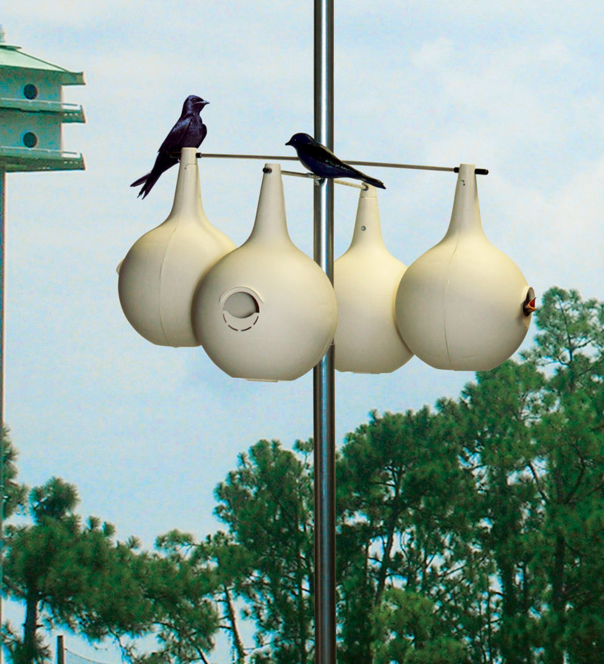 Purple Martin Gourd House  Want to control mosquitos ? Put this house in an open area in your yard, away from trees and bushes. You will love watching Martins glide throughout your yard…