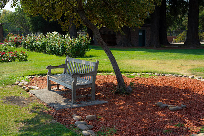 bench-garden.jpg