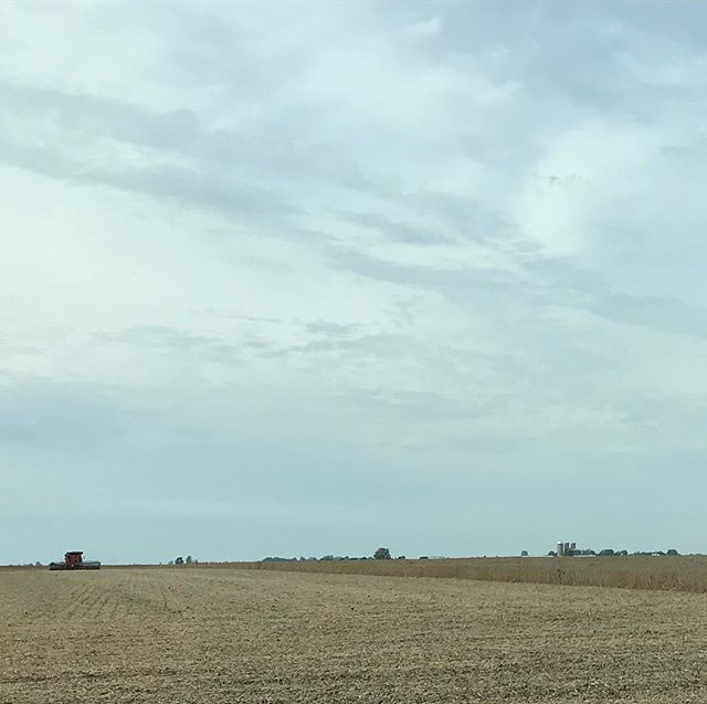 """In lieu of some big comeback or lengthy explanation for my absence, let's just restart our conversation with an image. Harvest. I was surprised by how much this year's corn and soybean ingathering has thrilled me. """"Look guys!"""" I yell to the back of the minivan while I drive. """"Harvesters!!"""" . Perhaps I'm excited because so much in my life seems so far away from harvest. It seems that I'm not watching plants grow big in my heart or my career or my spiritual walk. I'm not even planting seeds. Whenever I've lifted my head up this summer it feels like I'm just breaking up ground. It can be exciting, opening new land for use. But most of the time it's just a plain grind, and feels aspirational at best. . So when I round the corner and a field that we've been driving past for months is suddenly mown to the earth, I get a little tickled. If a field can wait patiently through the furrowing, through the tiny sprouts and summer storms til the day when the whole landscape changes, perhaps so can I."""