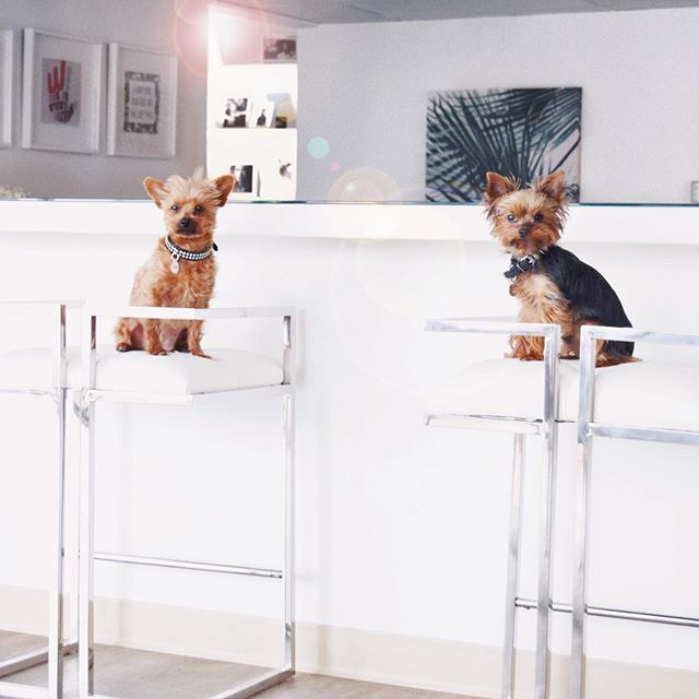 Just a couple of workin' pooches. #SwishPups #SwishCoCreate 💕