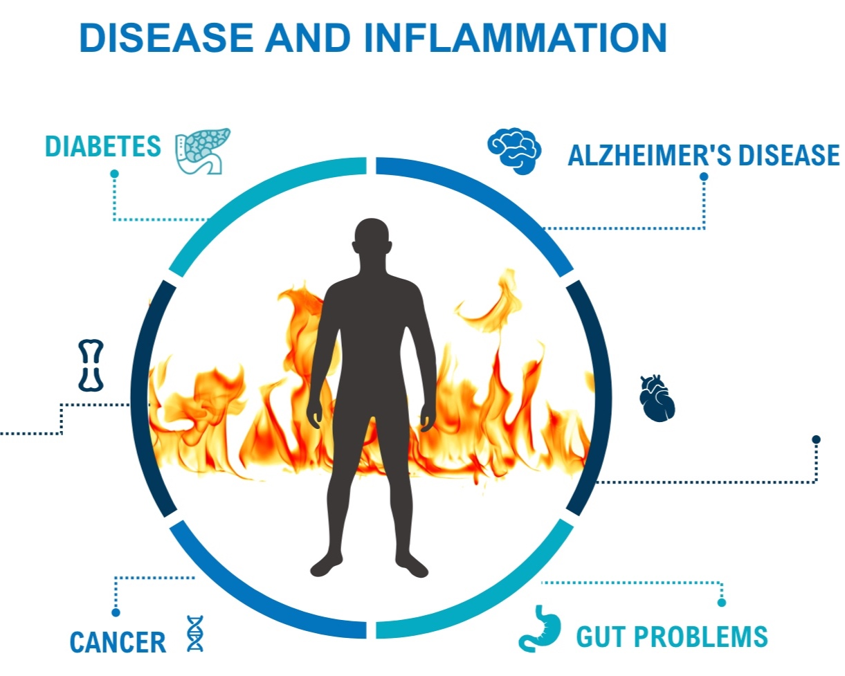 """Reduce inflammation - Recent research from well-known sources such as the Harvard School of Public Health, has found that many illnesses are directly related to inflammation in the body including heart disease and stroke, Alzheimer's disease, diabetes, arthritis, cancer and even stomach or intestinal problems.What exactly is inflammation? Inflammation literally means the body's immune system is on fire. Flames flare up throughout the body disabling joints, causing heart disease, stomach pain, and much more. Inflammation, causes """"itis"""" illnesses. Any medical term that has """"itis"""" at the end is a type of inflammatory disease, like arthritis (painful joints), carditis (heart disease) and gastritis (pain in the gut). These are some of the most common illnesses associated with aging; yet, they are the most preventable."""