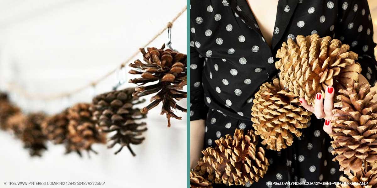 1-Pinecones.jpg