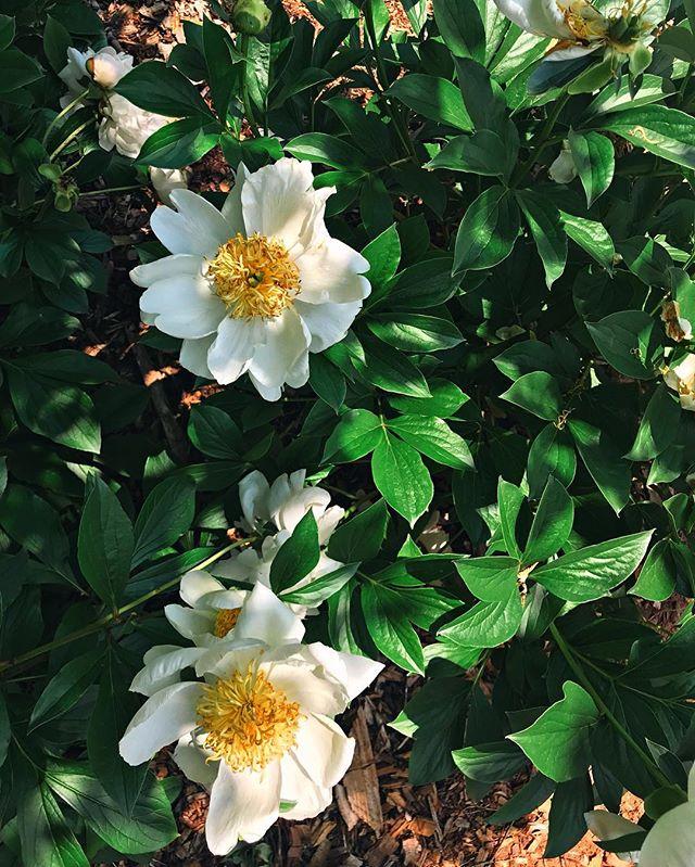 a walk through the flower garden 🌥