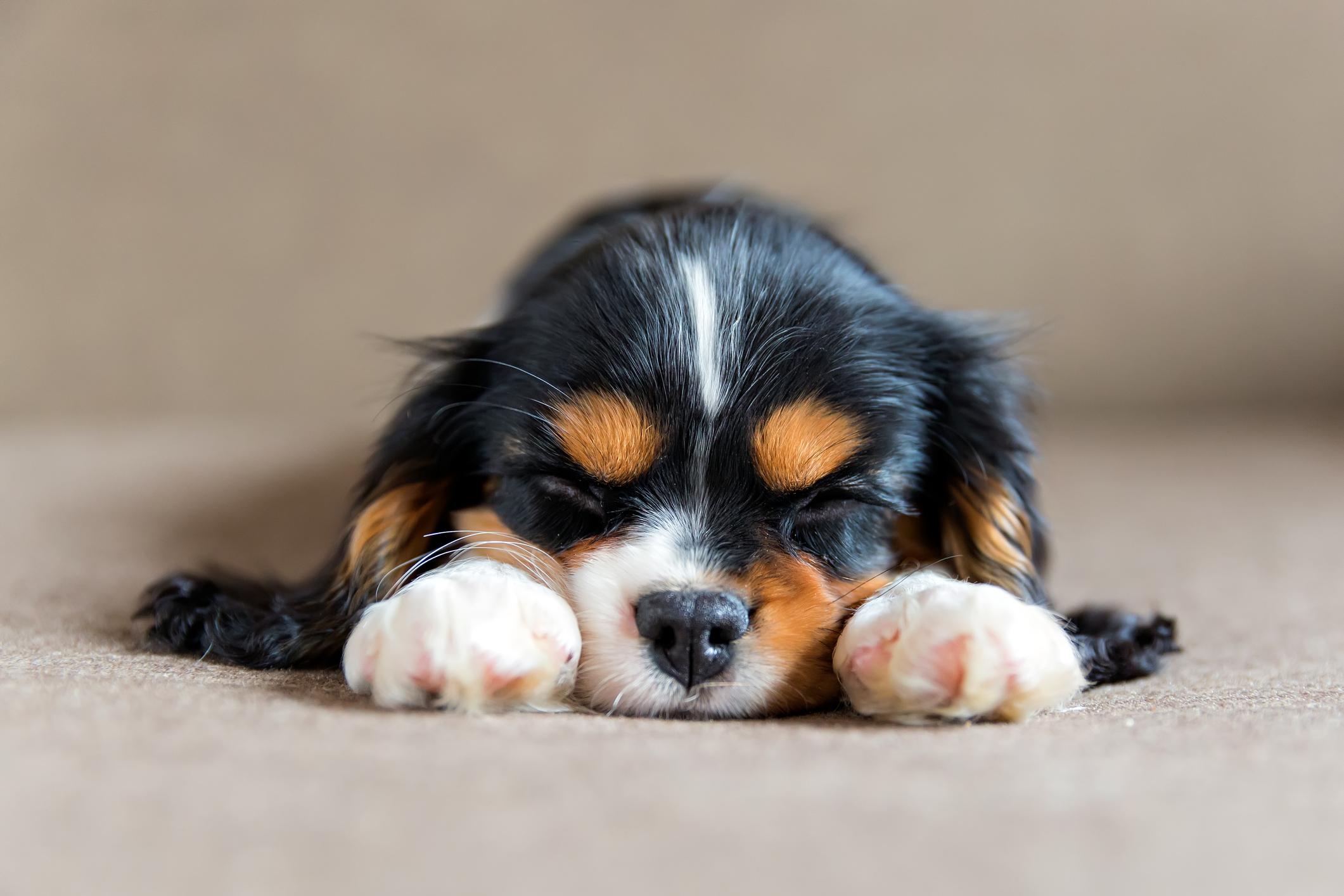 best-puppy-trainer-piedmont-triad-nc