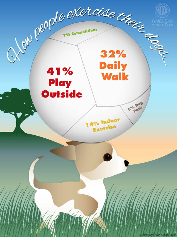 how-much-to-exercise-my-dog-akc
