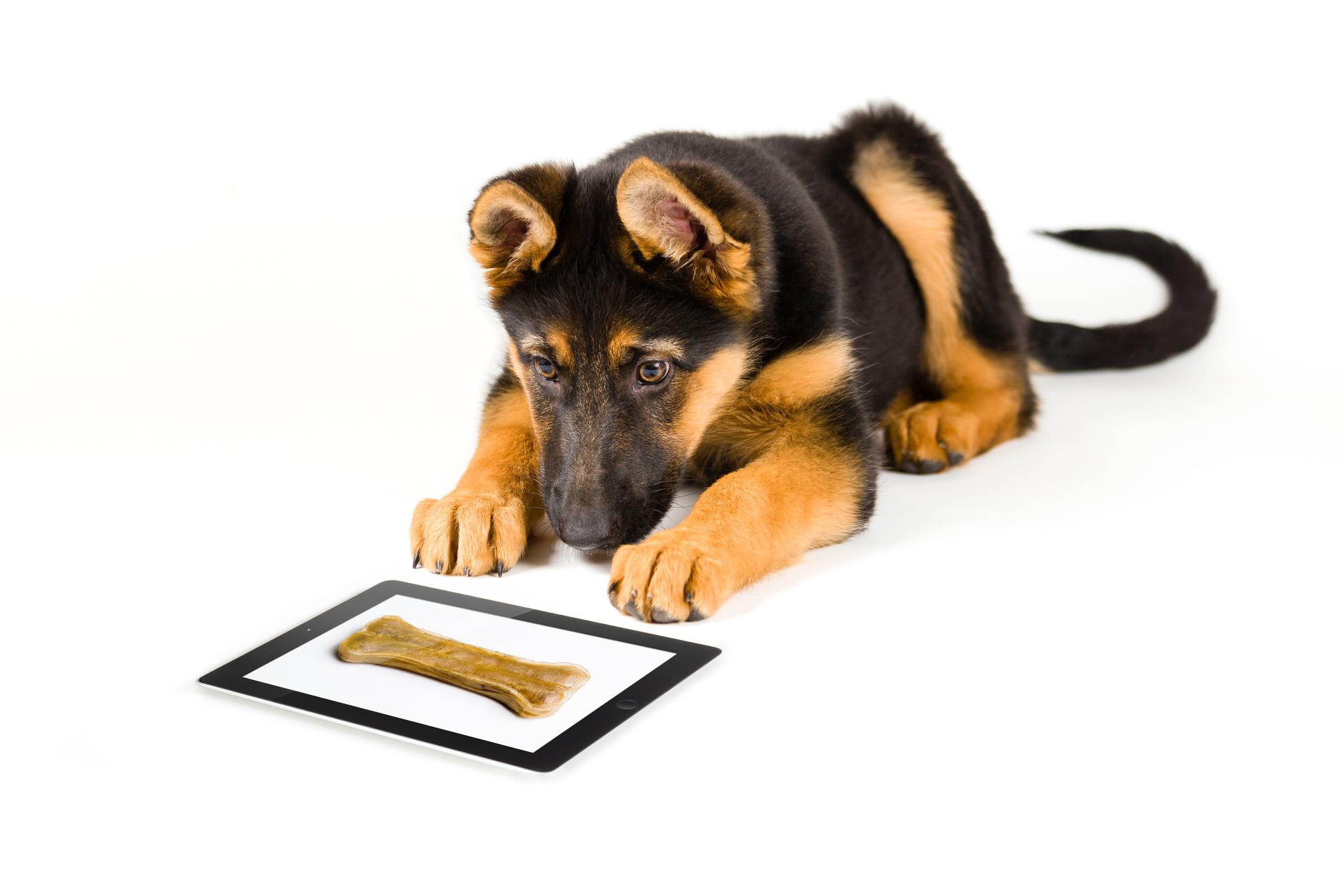 dog-training-resources-piedmont-triad