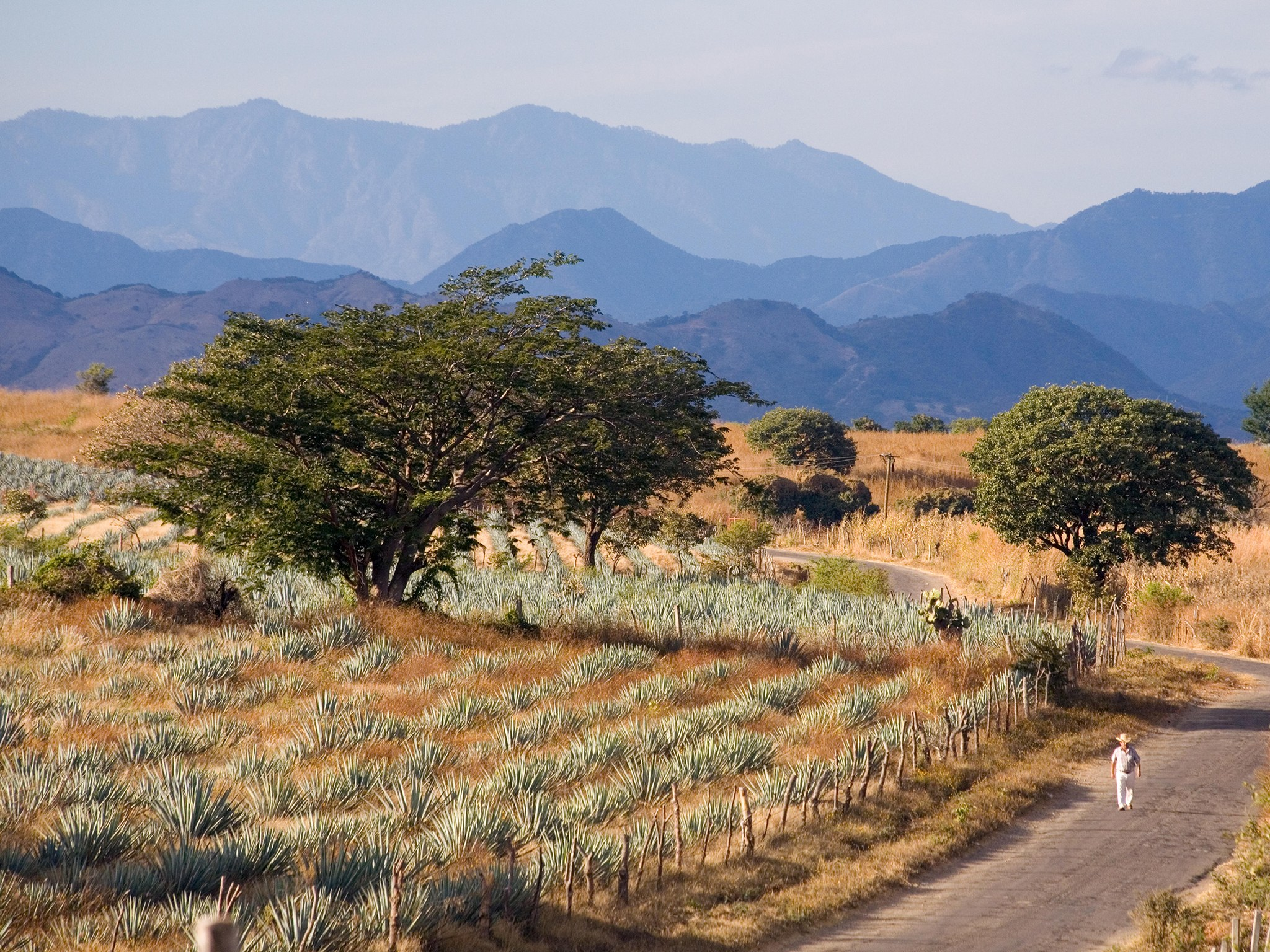 tequila-trail-jalisco-mexico.jpg