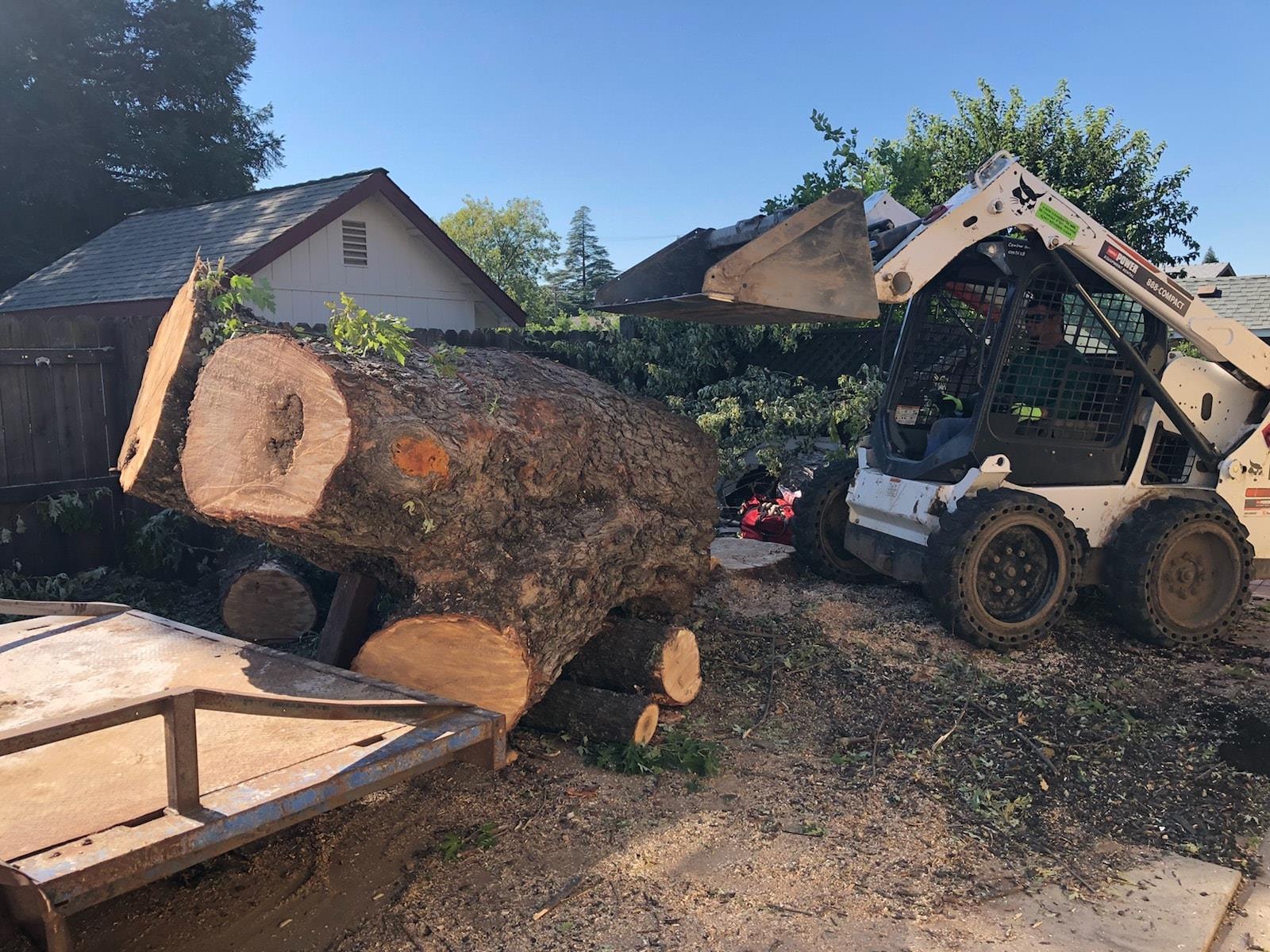 tree_stump_removal.jpg